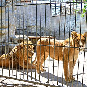 Zoos and animal enclosures